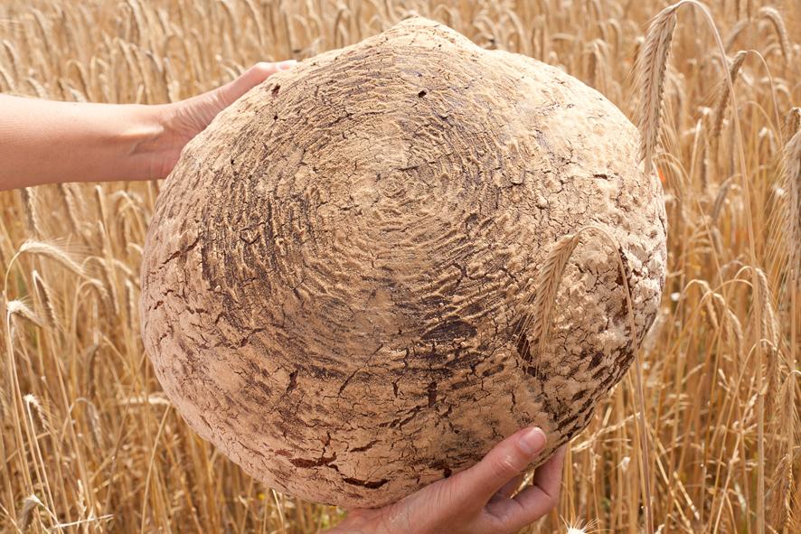 Wieviel Getreide benötigt ein Brot?
